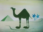 1956-nature-camel-03