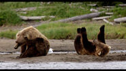 Disneynature-bears-3