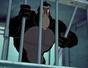Gorila Dumbo