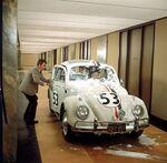 Herbie in the hallways