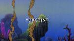 Urchin1