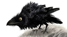 Brave the crow