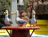 Seagulls-Nemo