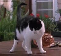HONEY I SHRUNK THE KIDS (1989) HDTV 720p -solstars-.mkv 20161225 233014.947