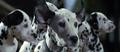 101-dalmatians-1996-7.png