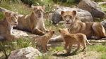 Lionking2019-animationscreencaps.com-2109