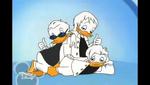 Quackstreet Boys posing