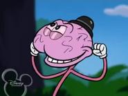Whiskers Brain