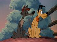1945-coyote-5