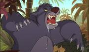 Baloo the Bear is roaring