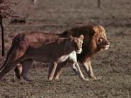 3. Lion