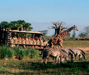 Kilimanjaro Safaris COOL