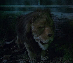 Cowardly Lion Return to Oz