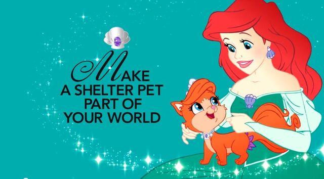 File:Shelter Pet Project Princess.jpg