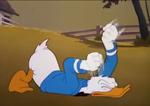 Poor Donald