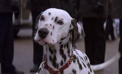 Perdita 1996 101 Dalmatians