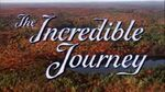 The Incredible Journey Title Card