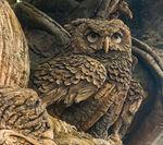 ToL Owl