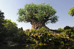 Tree of Life Lake