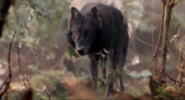 Timber Wolf 3