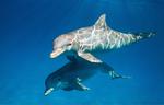 Dolphins film