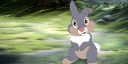 Thumper2