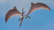 Donnerknall fliegt