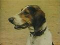1957-hound-02.jpg