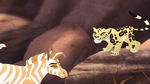 The-golden-zebra (480)