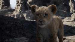 The Lion King (2019 film) Nala cub