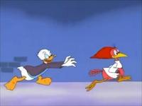 Donald chasing Aracuan Bird