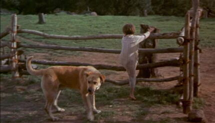Old-yeller-disneyscreencaps.com-1472