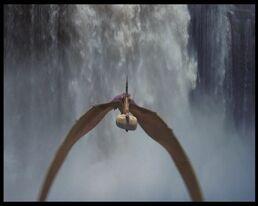 Pteranodonte di Dinosauri