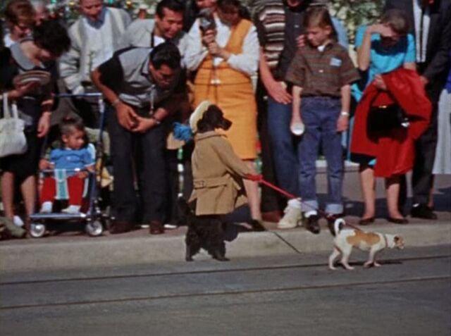File:Dog leading a dog.jpg