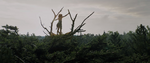 Pete's Dragon 2016 Shot1