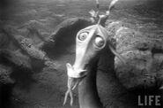 Submarine Voyage Sea Serpent