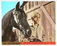 24115 - Ride a Northbound Horse