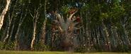 Der Tierchen-Sammler kommt aus dem Wald