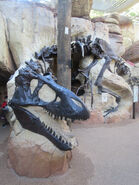 Boneyard T-Rex