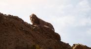 Scar Gorge 2019