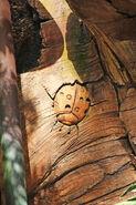 ToL Ladybug