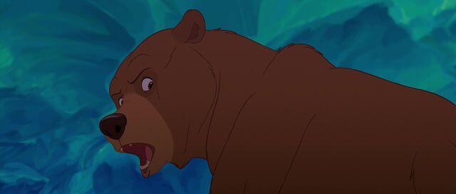 File:Bear 5.jpg