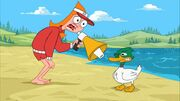 Candace yells at a duck