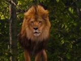 Leão Covarde