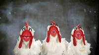 GagaMuppets-Chickens