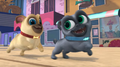 Puppy Dog Pals (009)
