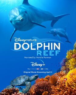 Dolphin Reef - Poster
