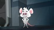 Penn the Mouse
