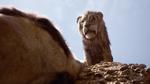 Scar looking down at mufasa 2019