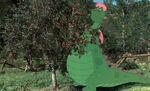 Petes-dragon-disneyscreencaps.com-853